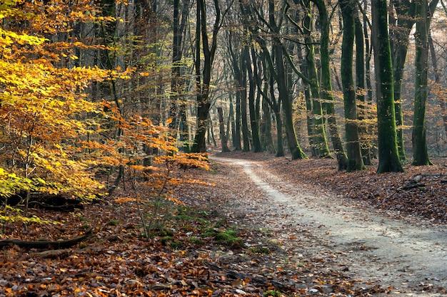 Camino en un bosque rodeado de árboles y hojas bajo la luz del sol en otoño