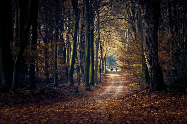 Camino en un bosque rodeado de árboles y hojas bajo la luz del sol