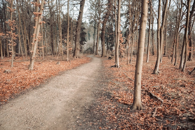 Camino en un bosque rodeado de hojas y árboles bajo un cielo nublado