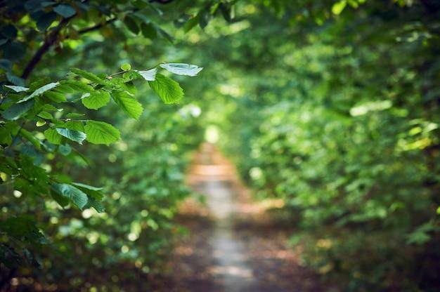 Camino en el bosque soleado de verano. enfoque selectivo