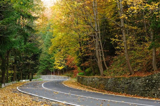 Camino en el bosque en transfagarasan