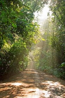 Camino en el bosque verde con la luz del sol en la mañana