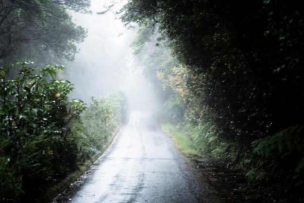 Camino brumoso en el bosque