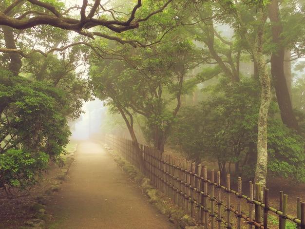 Camino brumoso