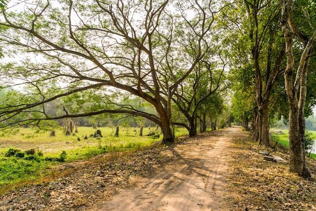 Camino camino con árboles verdes en el bosque.