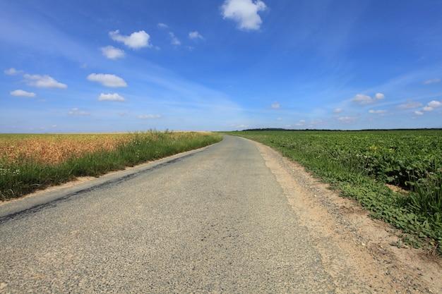 Camino en el campo en verano bajo el sol.