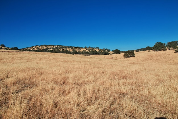 Camino en campos de california, estados unidos