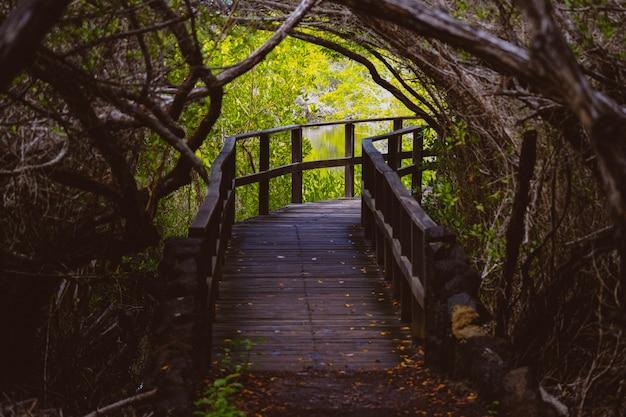 Camino curvilíneo de madera en medio de árboles y agua en una distancia