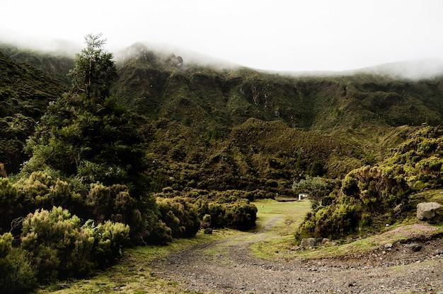 Camino curvilíneo en medio del bosque con una montaña en el fondo