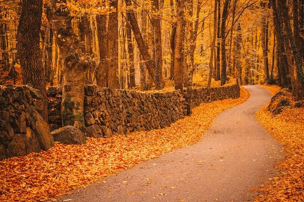 Camino dentro de un bosque en otoño