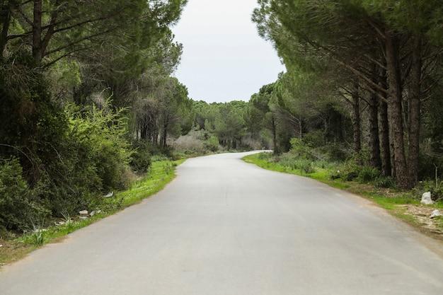 Camino del desierto pasando por el bosque
