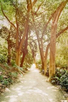 Camino en bosque soleado
