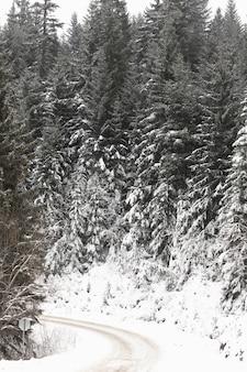 Camino forestal congelado y pinos con nieve