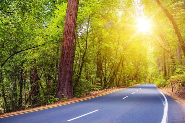 Camino forestal escénico