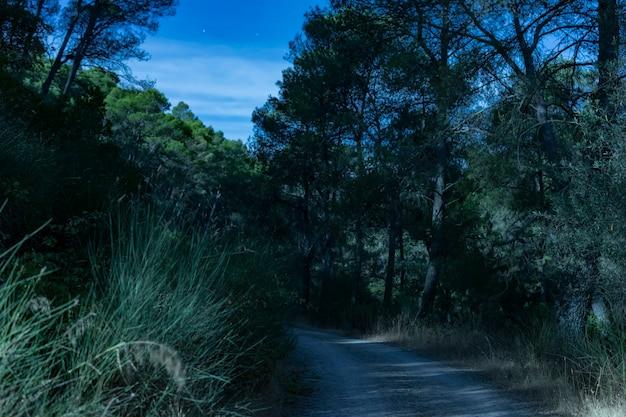 Camino forestal de larga exposición en la noche