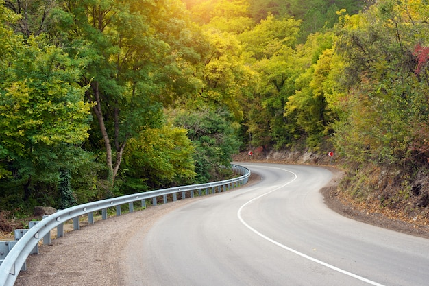 Camino forestal y rayos de sol.
