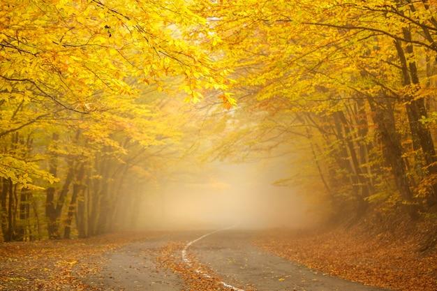 El camino y un hermoso bosque de otoño con hojas amarillas en la niebla.