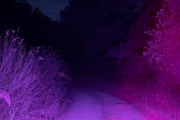 Camino iluminado de noche