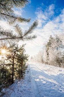 Camino de invierno en los árboles. día soleado
