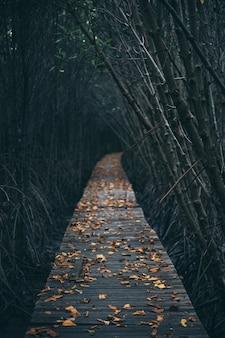 Camino de madera en el bosque de manglar, sienta la naturaleza, fresco y relajado