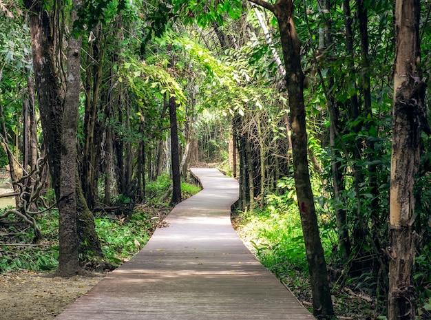 Camino de madera en el bosque tropical