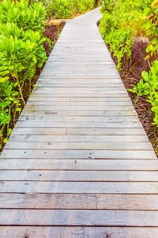 Camino de madera para caminar