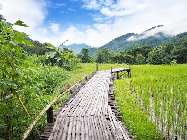 Camino de madera en el campo de arroz