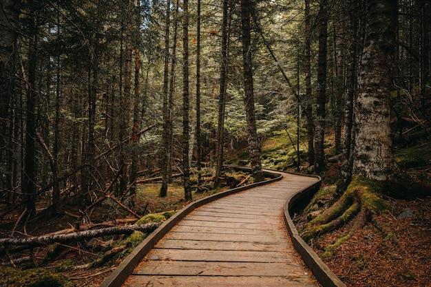 Camino de madera dentro de un bosque