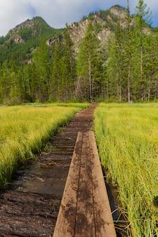 El camino de madera, montañas de altai