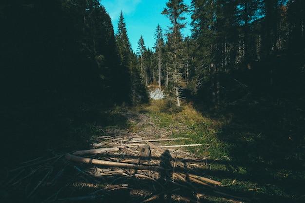 Camino en medio de altos árboles en el bosque en un día soleado