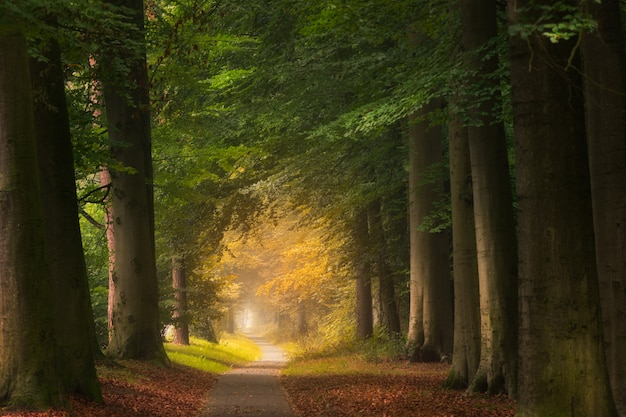 Camino en medio de un bosque con árboles grandes y verdes