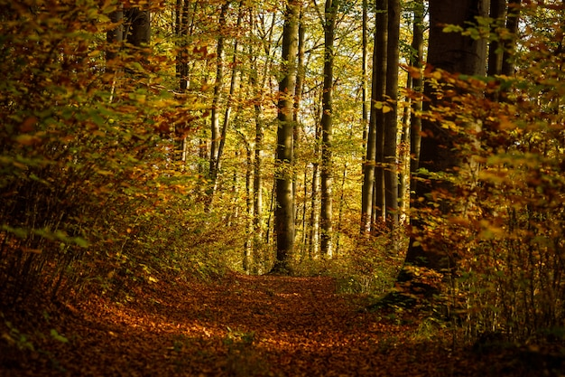 Camino en medio de un bosque con árboles de hojas amarillas y marrones durante el día