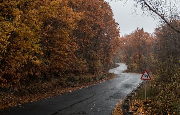 Camino mojado en un bosque capturado en un día lluvioso durante el otoño
