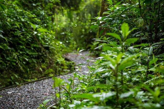 Camino mojado en la selva después de la lluvia