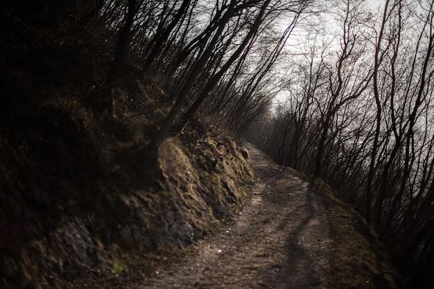 Camino de montaña oscura