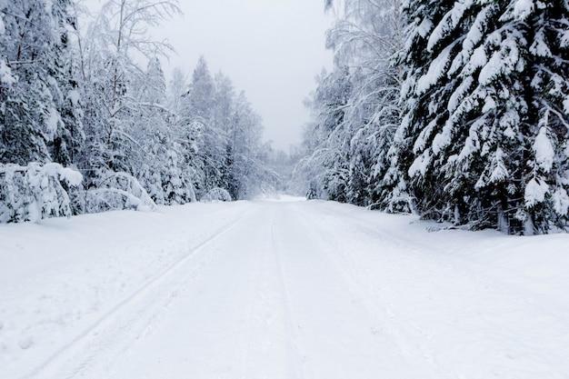 Camino nevado en bosque de invierno, hermoso paisaje helado, rusia