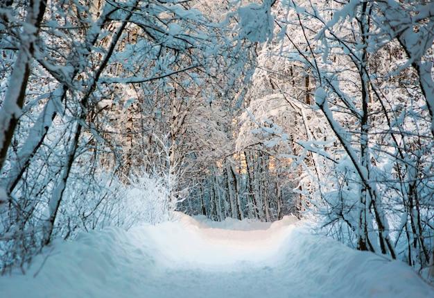 Camino nevado en el bosque. paisaje del invierno.