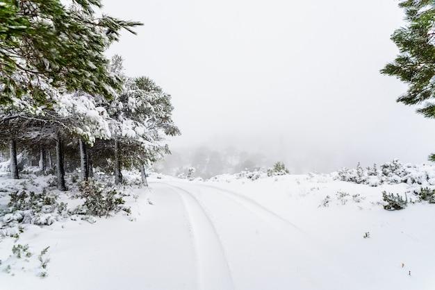 Camino nevado en la montaña un día de invierno