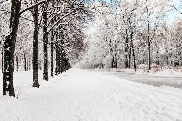Camino nevado en varios árboles en un bosque