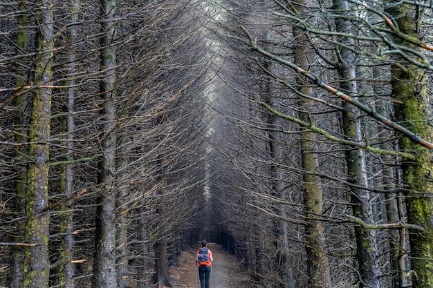 Camino oscuro con árboles sin hojas en wicklow.
