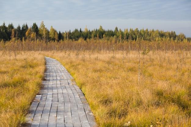Camino en el otoño amarillo fild en el pantano