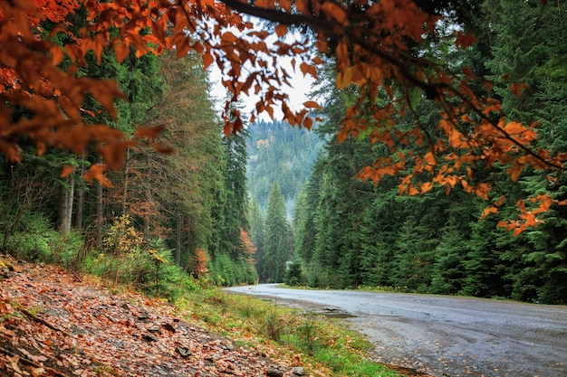 Camino de otoño en los cárpatos en el bosque