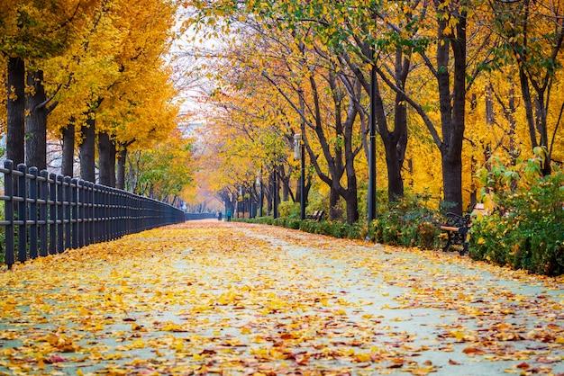 Camino de otoño en el parque, seúl, corea.