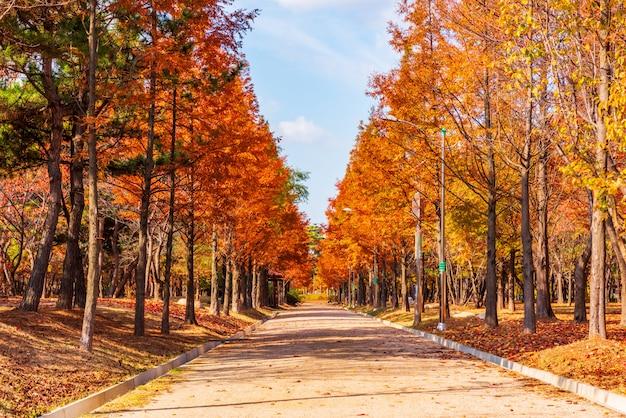 Camino de otoño en el parque