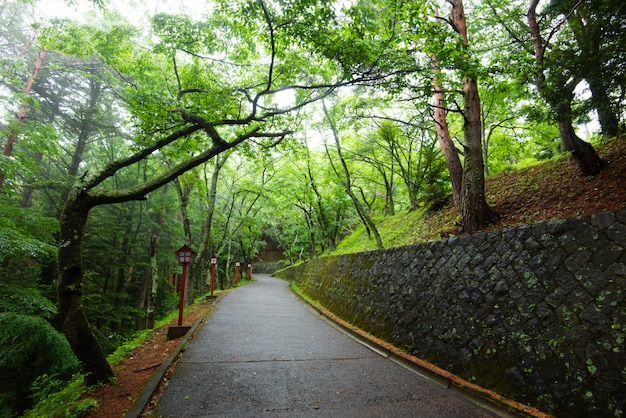 El camino en el parque con árboles para hacer ejercicio y relajarse