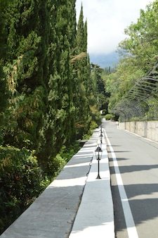 Camino pavimentado con las linternas a lo largo del callejón del ciprés en el parque en un día de verano soleado.