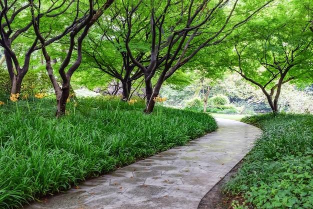 Camino de piedra con césped y árboles