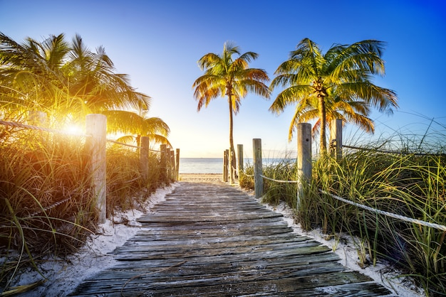 Camino a la playa con palmeras