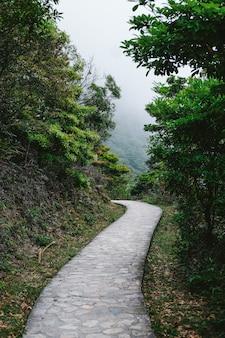 Camino que conduce a las selvas tropicales