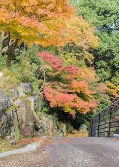 Camino romántico de otoño en miyajima, japón